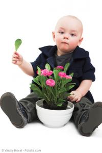 Giftige Zimmerpflanzen - Kinder haften für Ihre Eltern