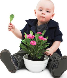 giftige zimmerpflanzen kinder haften f r ihre eltern wohnen mit flair. Black Bedroom Furniture Sets. Home Design Ideas